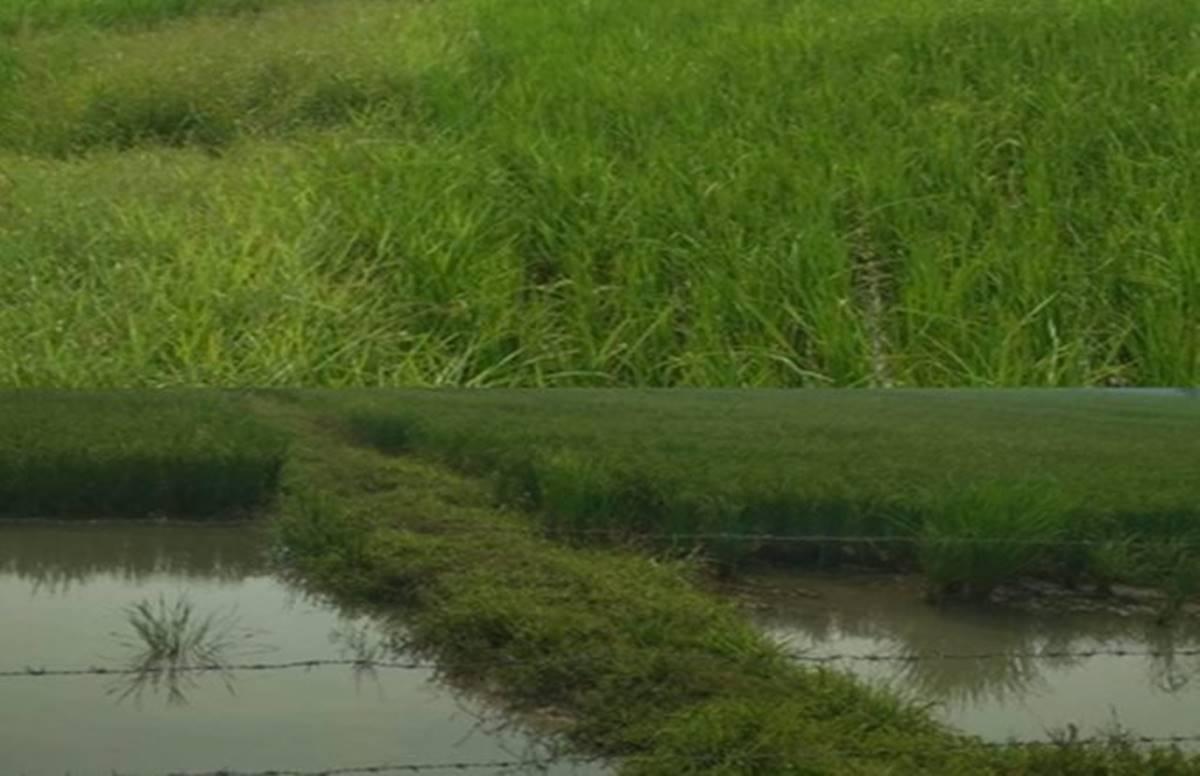 Jakhani Model, Water Conservation